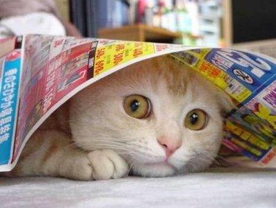 cat+takut